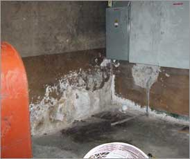 Efflorescence, commonly mistaken for mold